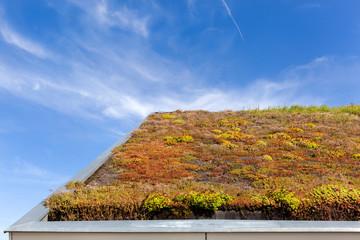 Dachbegrünung kosten