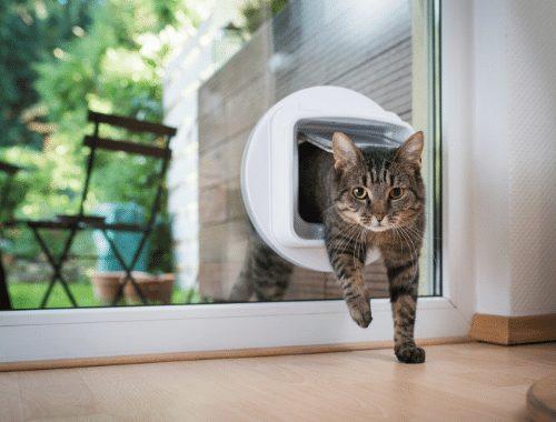 Katzenklappe einbauen kosten